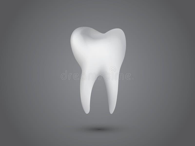Un dente umano bianco fresco sano su fondo grigio scuro per le cliniche dentarie illustrazione di stock