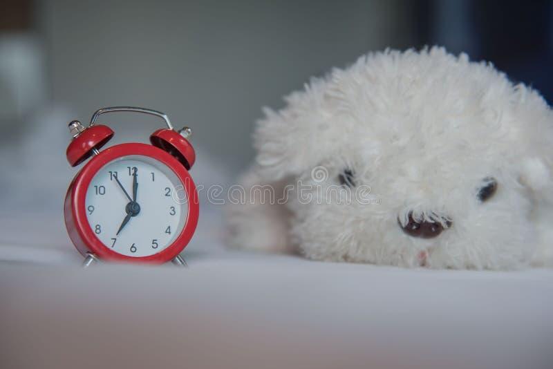 Un despertador con la muñeca blanca linda del perro en la cama por la mañana foto de archivo