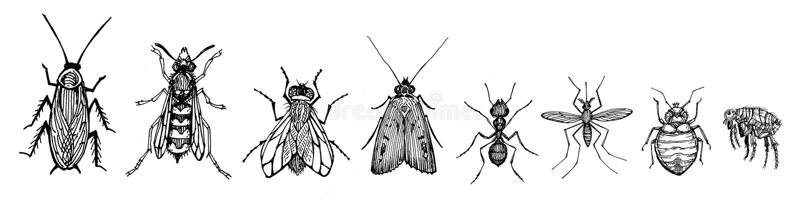 Insectos libre illustration