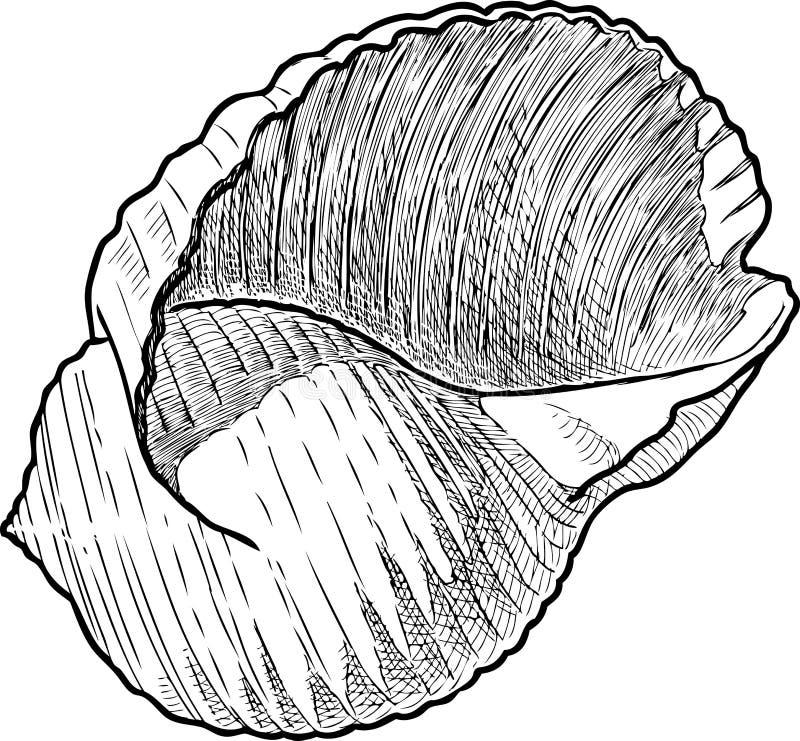 Un dibujo de la mano de una concha marina stock de ilustración