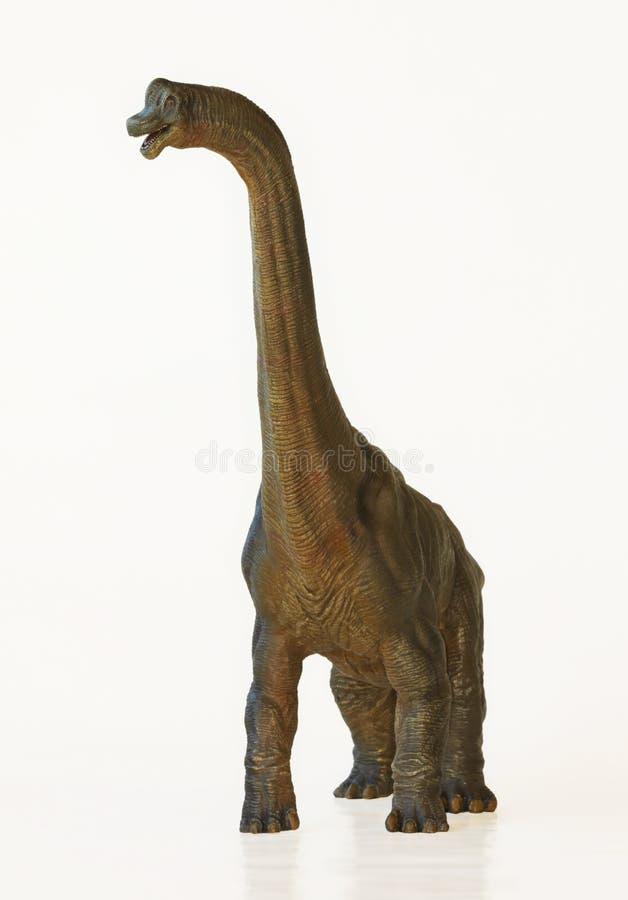 Un dinosaurio alto del Brachiosaurus, o lagarto del brazo fotos de archivo