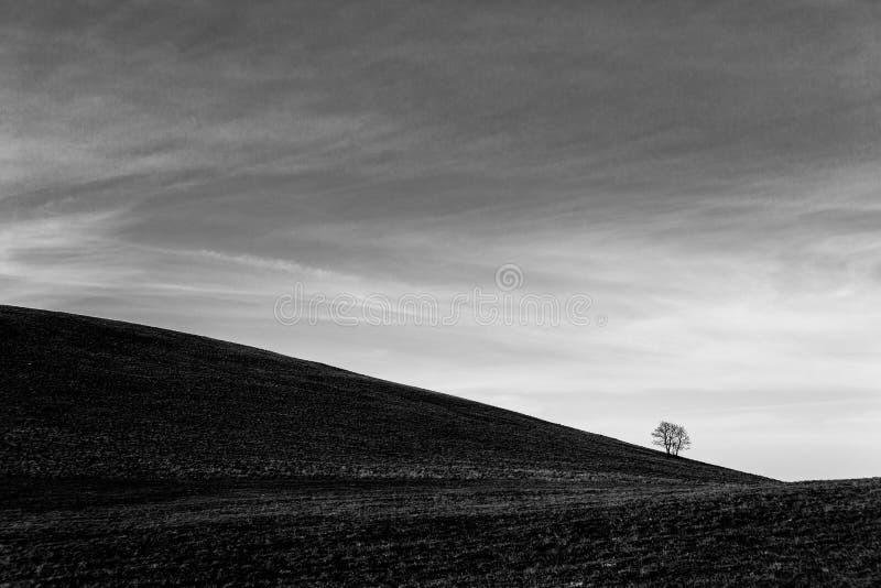 Un distante, árbol del loney en una colina desnuda, debajo de un cielo profundo con las nubes blancas fotografía de archivo