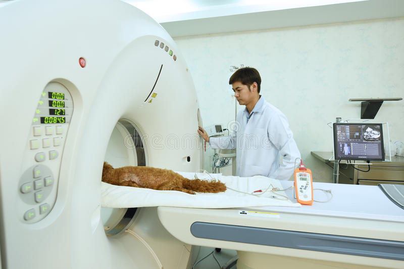 Un docteur vétérinaire travaillant dans la pièce de scanner d'IRM images libres de droits