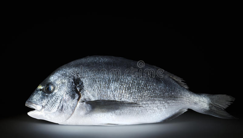 Un dorado del pesce su fondo nero fotografia stock libera da diritti