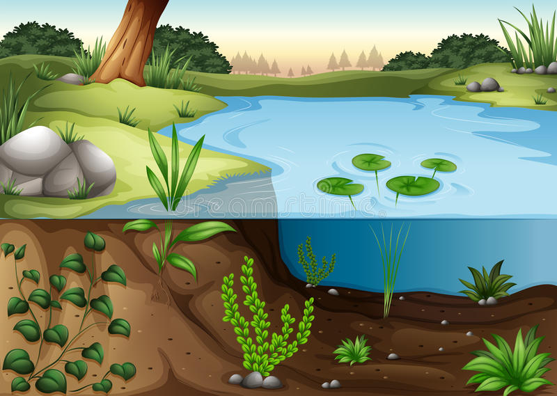 Un ecosytem dello stagno illustrazione di stock