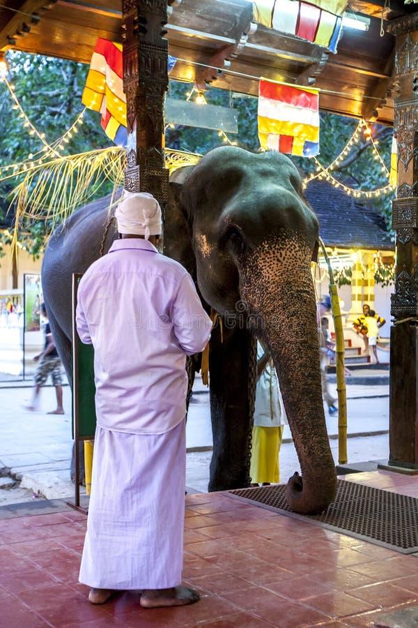 Un elefante cerimoniale aspetta per essere benedetto all'entrata ad un tempio all'interno del tempio della reliquia sacra del den fotografia stock