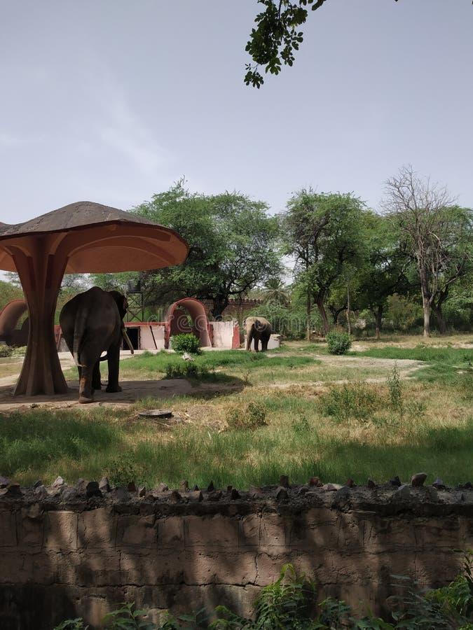 Un elefante que descansa sobre día de verano caliente en vertiente fotografía de archivo libre de regalías