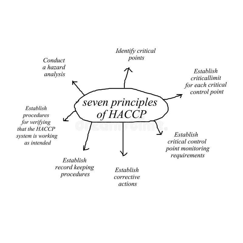 Un elemento di scrittura della mano della donna del principio sette di concetto del haccp su fondo bianco illustrazione vettoriale