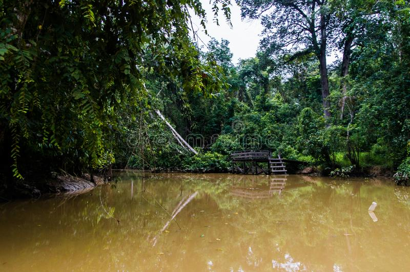 Un embarcadero de madera abandonado viejo en una selva tropical enorme a lo largo del grito fotografía de archivo
