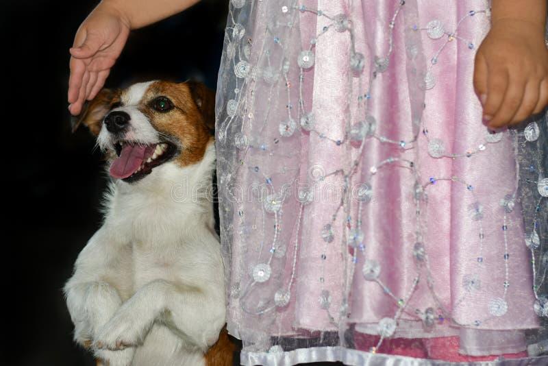 Un enfant dans une robe rose joue avec un chien qualifié sur un fond noir photos libres de droits