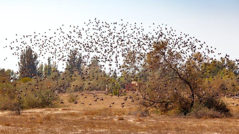 Un enjambre de pájaros imagen de archivo