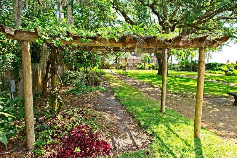 Un enrejado de la uva en el jardín situado sobre la base del Gonzalez Alvarez House en St Augustine histórico, la Florida fotografía de archivo libre de regalías