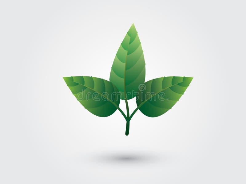 Un ensemble de la feuille trois verte étroite ensemble pour le logo illustration libre de droits