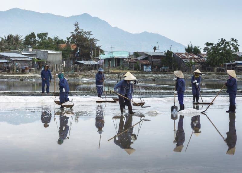 Un equipo cosecha la sal rastrillando, sacando con pala y llevándose foto de archivo