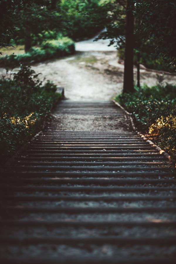 Un escalier en bois dans la forêt images stock