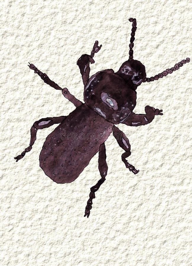 Un escarabajo negro en la acuarela, pintada a mano foto de archivo libre de regalías