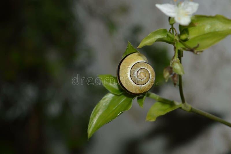 Un escargot photos libres de droits