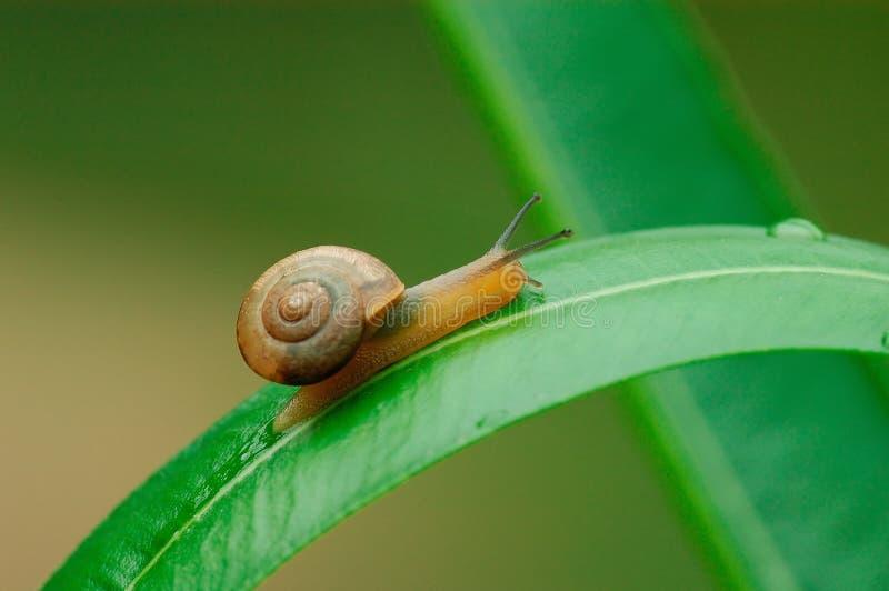 Un escargot sur la lame photographie stock