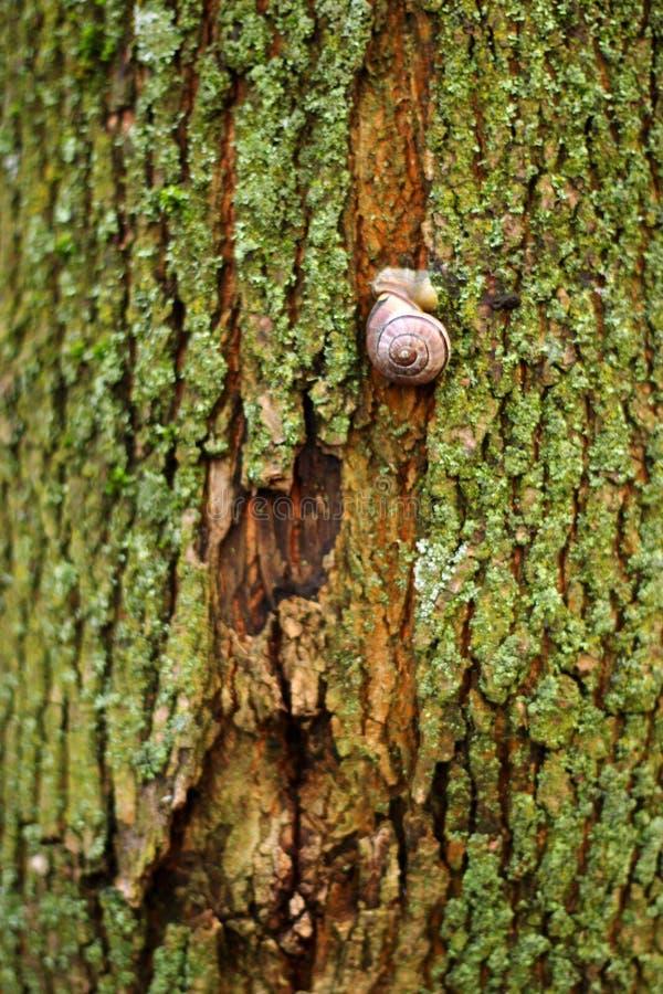 Un escargot sur un arbre vert photo stock