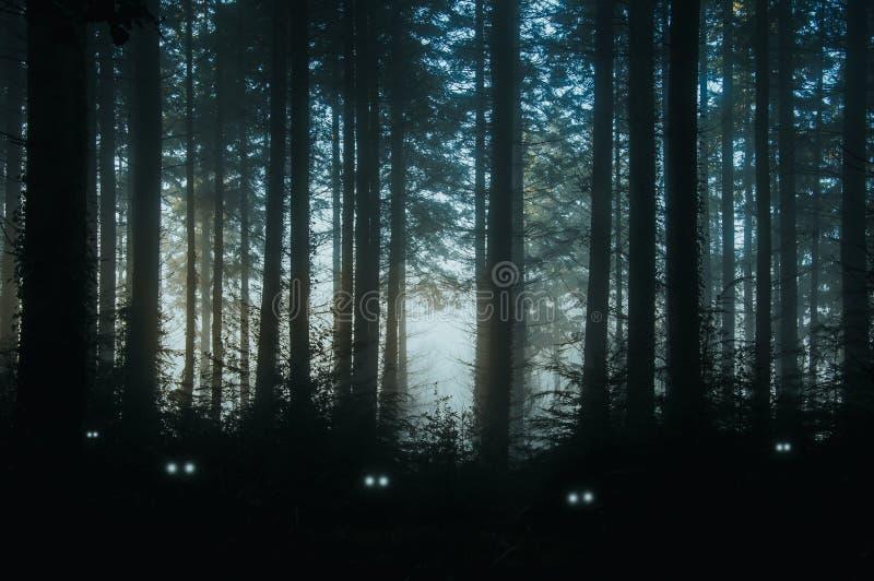 Un espeluznante, bosque de los árboles de pino, parte posterior de la fantasía encendida con los ojos fantasmagóricos, que brilla imagenes de archivo