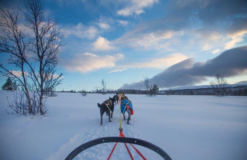 Un'esperienza emozionante che guida una slitta tirata da cani nel paesaggio di inverno Foresta e montagne di Snowy con un gruppo  fotografia stock libera da diritti