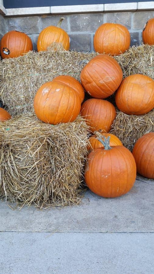 Un'esposizione della zucca pronta per Halloween o il ringraziamento fotografia stock libera da diritti