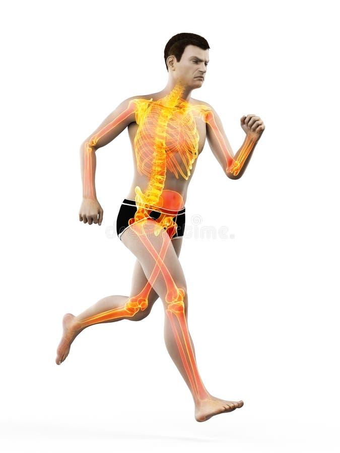Un esqueleto de los corredores libre illustration