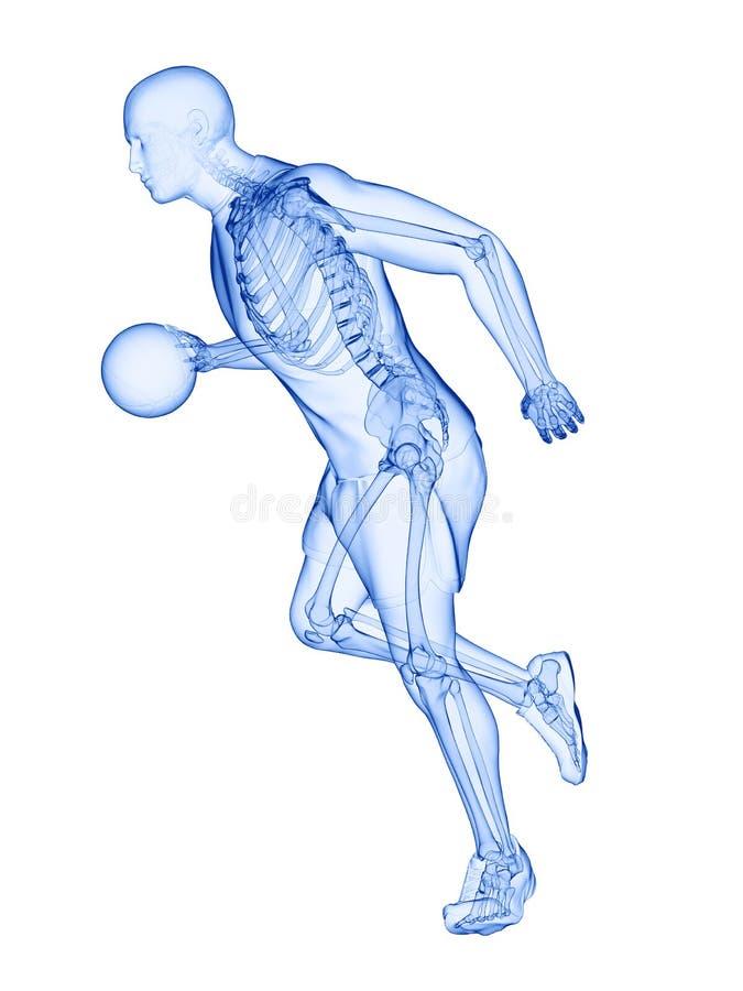 un esqueleto de los jugadores de b?squet ilustración del vector