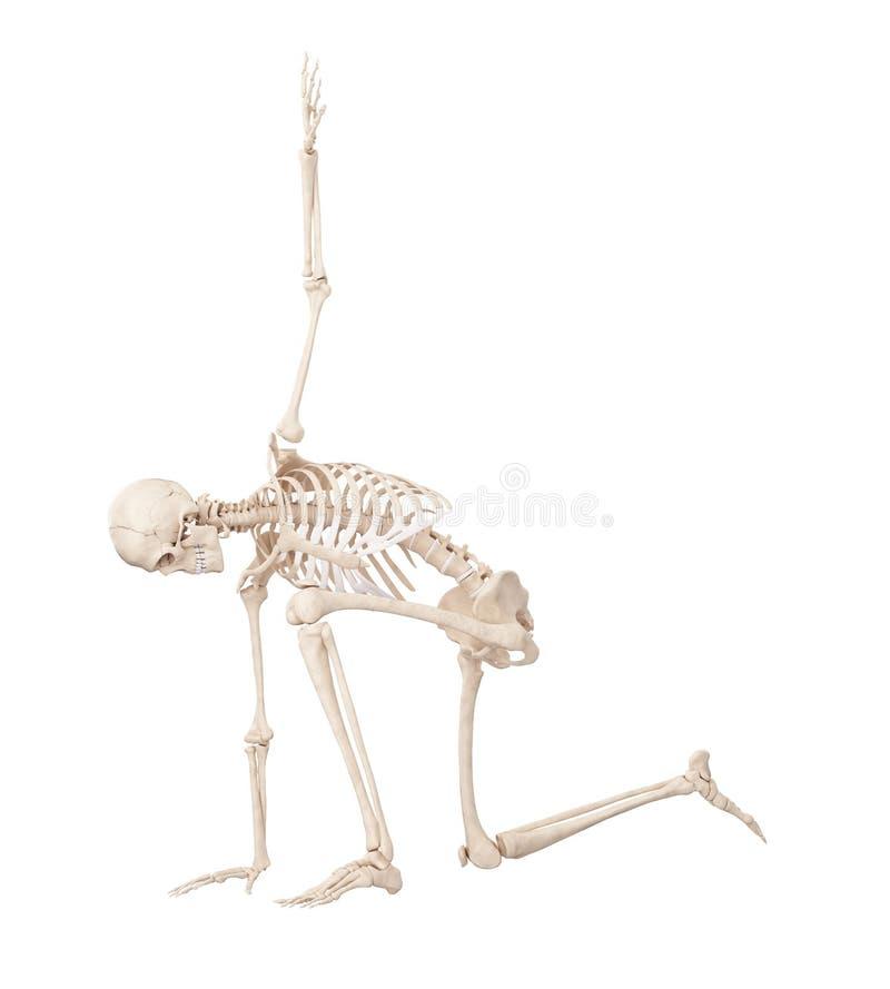 Un esqueleto de presentación libre illustration