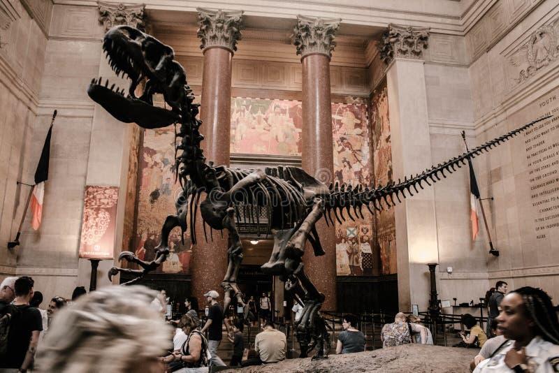 Un esqueleto decorativo de un dinosaurio imagen de archivo libre de regalías
