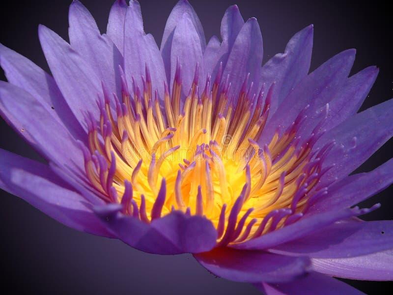 Un Estudio En Violeta Fotografía de archivo libre de regalías