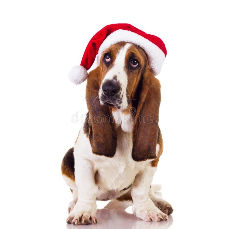 Un estudio tiró de un perro que desgastaba un sombrero de la Navidad foto de archivo