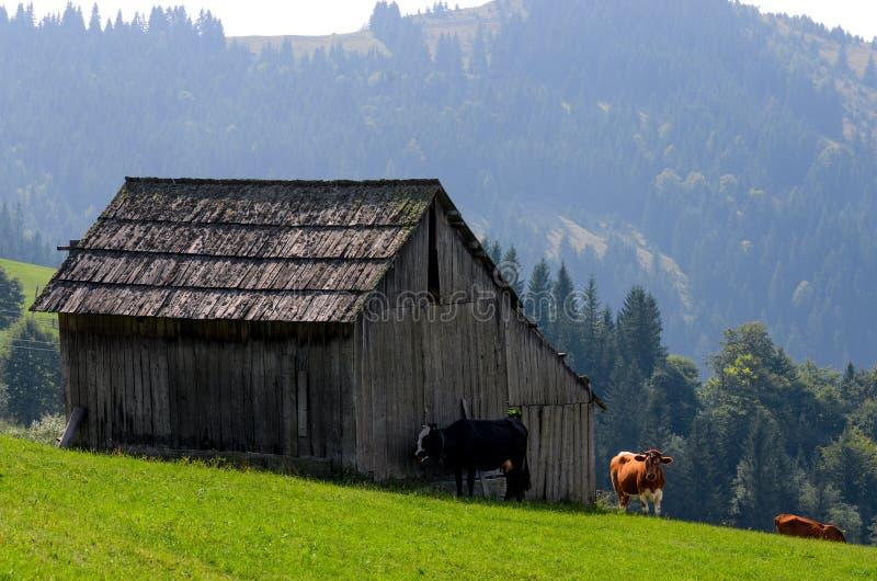 Un farmer' viejo; la casa de madera de s se opone en una montaña del elefante cerca de un pajar al contexto de los picos de m foto de archivo libre de regalías