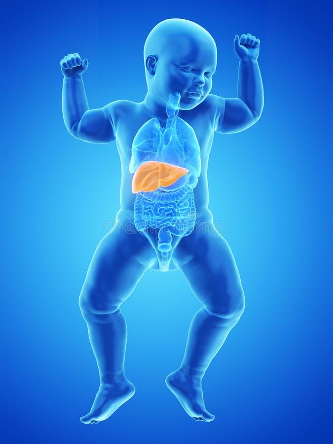un fegato dei bambini illustrazione vettoriale