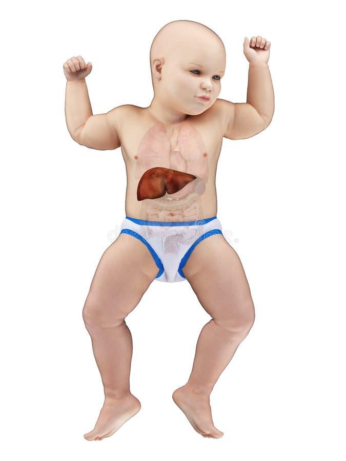 Un fegato dei bambini royalty illustrazione gratis
