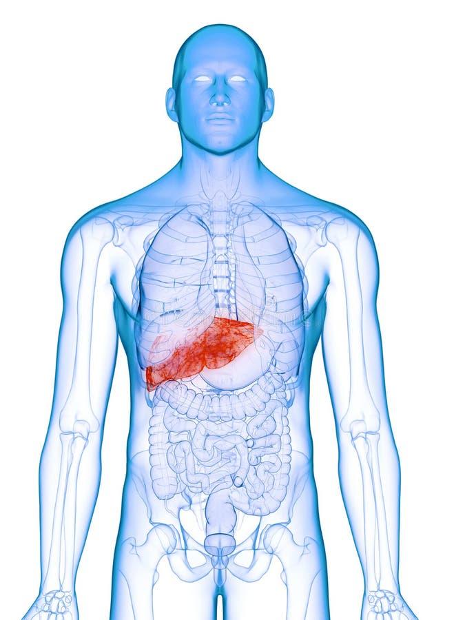 Un fegato malato royalty illustrazione gratis