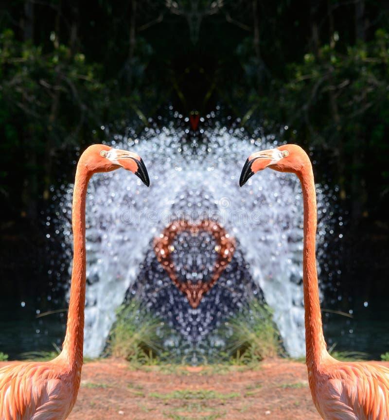 Fenicotteri e fontana rosa fotografia stock libera da diritti