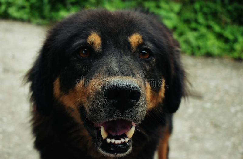Un festin svp Regardez mes canines photographie stock