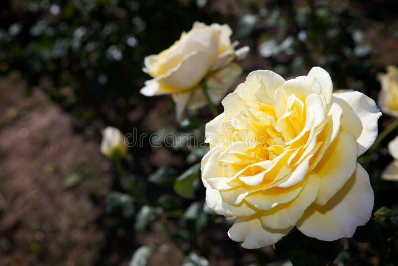 Un fiore immagini stock