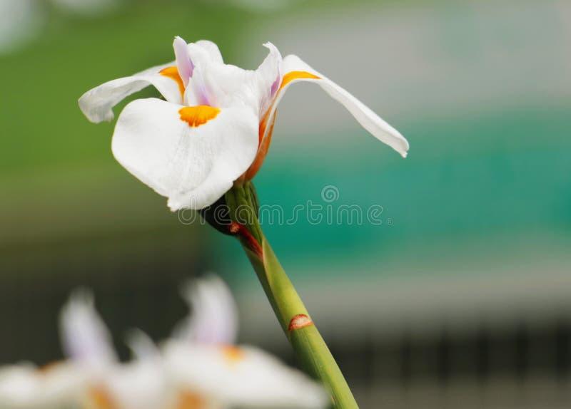 Un fiore di bellezza fotografia stock libera da diritti