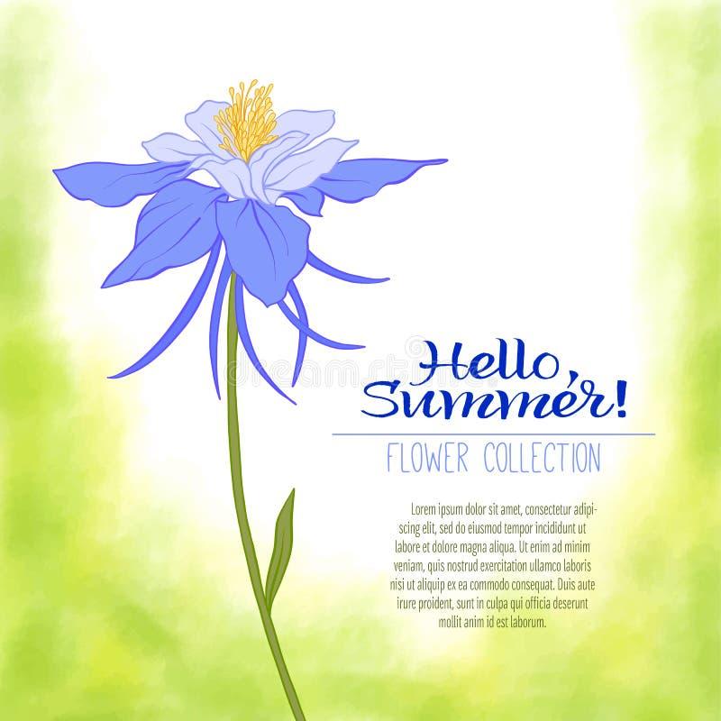 Un fiore di colombina su un fondo verde dell'acquerello I fiori royalty illustrazione gratis