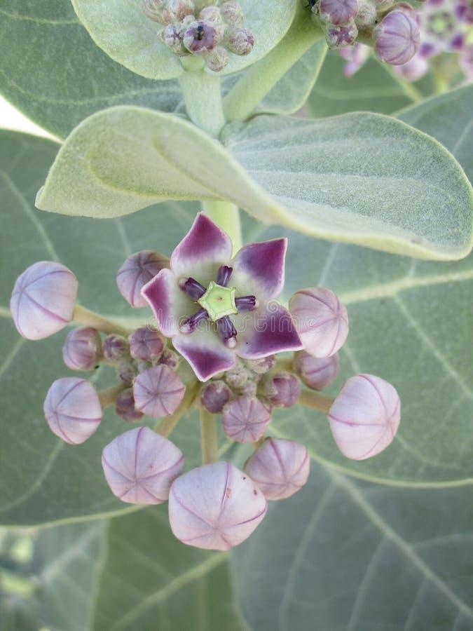 Un fiore selvaggio nella giungla immagini stock