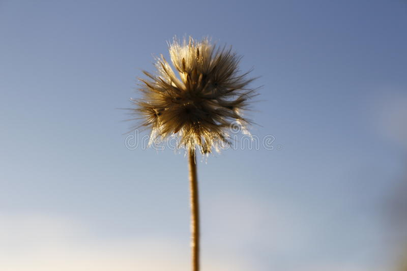 Un fiore sulla mattina nella festa immagini stock