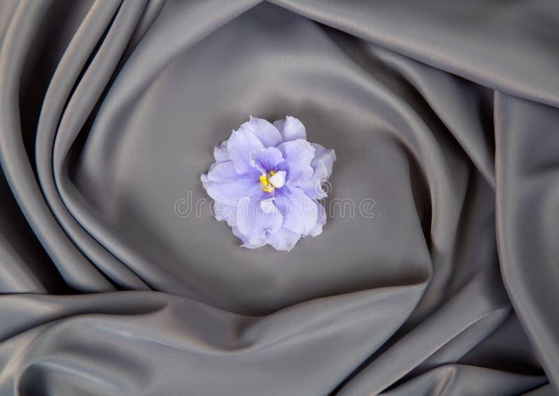 Un fiore viola con i petali porpora pieni ricci su un tessuto immagini stock libere da diritti