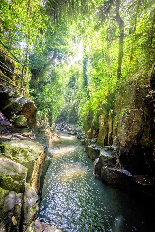 Un fiume della giungla in Bali, Indonesia fotografia stock libera da diritti