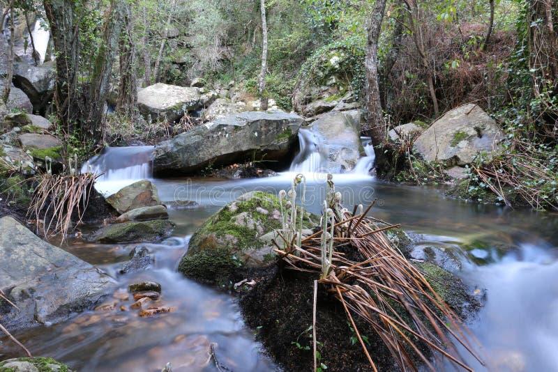 Un fiume pacifico nella foresta selvaggia fotografia stock libera da diritti
