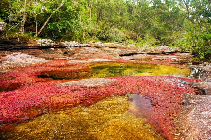 Un fiume rosso e giallo in Colombia fotografia stock