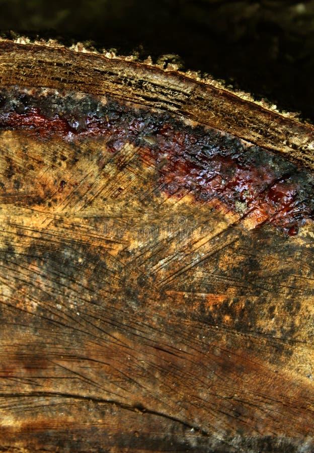 Un fond en bois de verticale de texture de coupe de croix photos stock