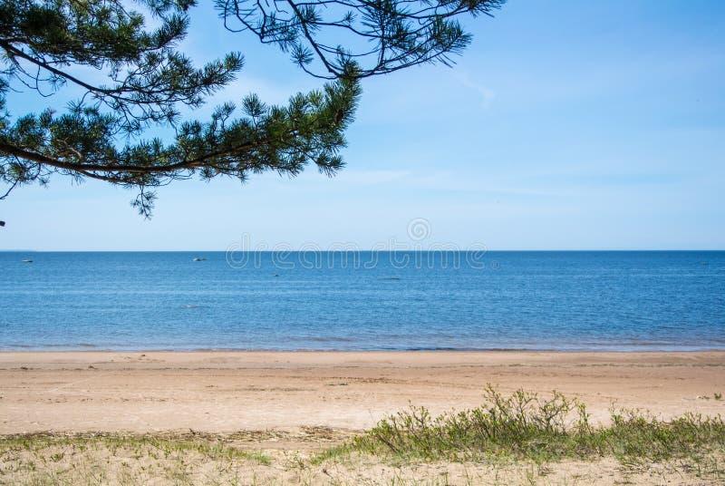 Un fond tranquille de côte de mer baltique, la branche de pin et un sable étayent le jour ensoleillé d'été photographie stock
