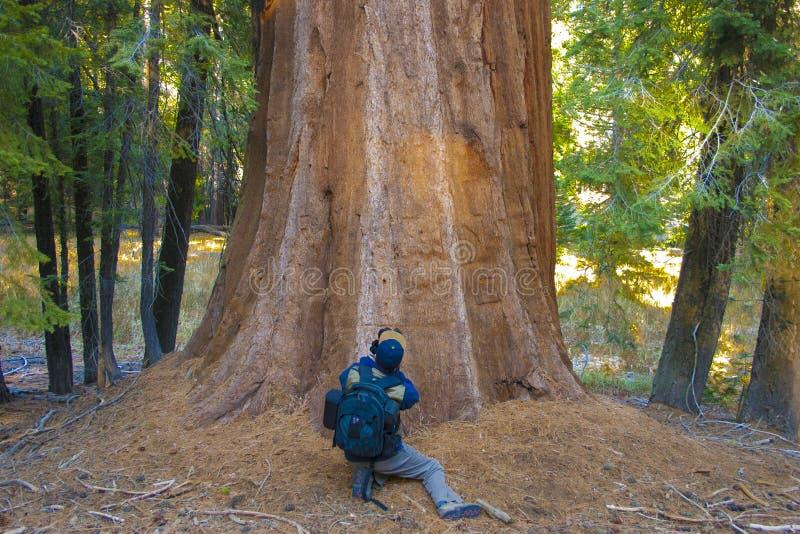Un fotógrafo cerca de un árbol fotos de archivo